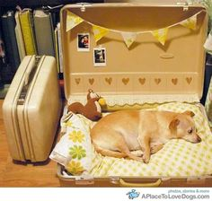 Awwww, suitcase doggie bed.