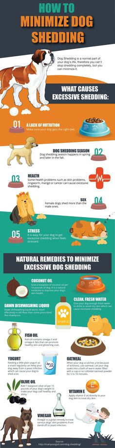 9 Ways To Reduce Dog Shedding - Infographic #puppytrainingdiy #DogCare