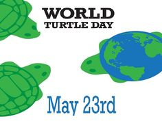 Encourage your #pets who make continual but slow progress and enjoy. Cheers on #WorldTurtleDay. Refreshing #modaymotivation