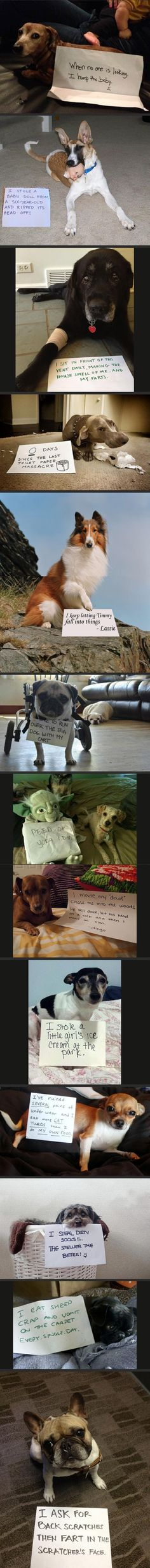 Dog Shaming the link has hilarious images too! I want to do this to our dog, but my husband wont let me :(