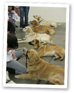 Visit our home, and we'll visit yours Receiving an autism service dog requires more than learning how to give commands. The dog will…