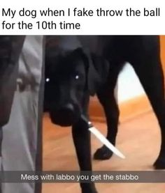 It's time to LAUGH with Dog's life Thanks For dog following us #funndog funnmemes #bestdogmemes #dogfunnypictures #funnypictures #funnypicturesdog Funny Animal Pictures, Funny Images, Funny Photos, Best Funny Pictures, Sports Pictures, Top Funny, Funny Love, Funny Animal Memes, Funny Animals