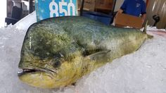 Fresh Mahi Mahi Seafood Online, Seafood Market, Fresh Seafood, Mahi Mahi