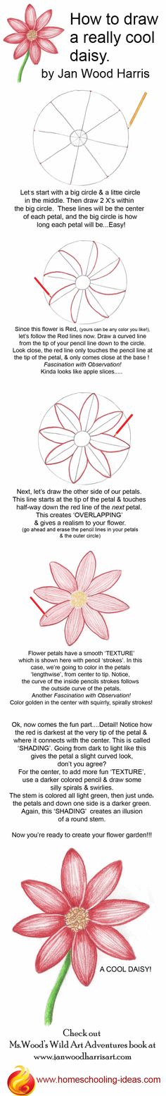 How to draw a cute daisy! Step by step, easy instructions.