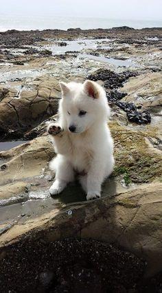cute puppies golden retriever the beach \ puppies on beach ; puppies at the beach ; cute puppies at the beach ; cute puppies on beach ; cute puppies golden retriever the beach Cute Baby Animals, Animals And Pets, Funny Animals, Animals Kissing, Funny Dogs, Silly Dogs, Strange Animals, Animals Images, Cute Creatures