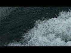 Whales Around the World - eNuminous & Archimedes - YouTube