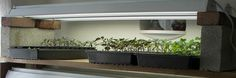 Grow an Indoor Vegetable Garden During the Winter Months