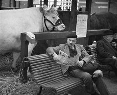 Fotó: 1er mars 1931, salon de l'agriculture  © André Kertesz Médiathèque de l'Architecture & du Patrimoine