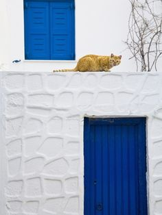 Cat on Wall of Typical Building, Hora, Mykonos Island, Cyclades, Greece