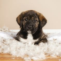 10 reasons you should introduce your pet to Skype. #Puppy