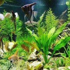 Akvarko Aquarium, Goldfish Bowl, Aquarium Fish Tank, Aquarius, Fish Tank