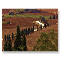 Tuscan Country Road Postcard
