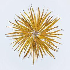Kerttu Siplane: Willow Leaves/Sun . .