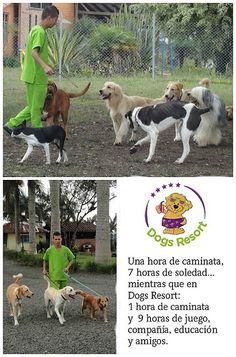 Las caminatas no son suficientes, porque los perros demandan mucha actividad. Nosotros te ayudamos para que tengas en casa, un perro tranquilo y feliz.