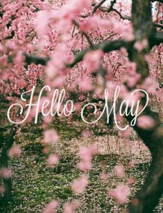 Hello May Quotes And Pictures U0026 Wallpapers Hd
