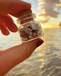 Beautiful little things ✨  Beach Aesthetic, Summer Aesthetic, Aesthetic Art, Aesthetic Pictures, Shells And Sand, Sea Shells, Creative Photography, Amazing Photography, Strand Wallpaper