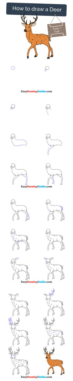 Learn How to Draw a Deer: Easy Step-by-Step Drawing Tutorial for Kids and Beginners. #deer #drawing #tutorial. See the full tutorial at https://easydrawingguides.com/how-to-draw-a-deer/