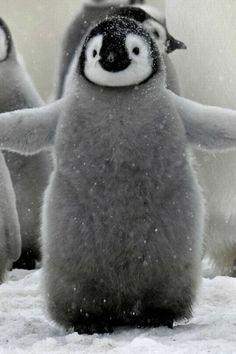 Hug ME!    YOU DON'T NEED TO ASK ME TWICE PINGU!!!!
