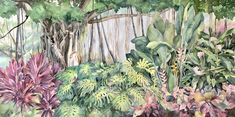 """""""A Honolulu Garden"""", 30""""x60"""" watercolor on paper. Loved doing the banyan tree for this commission watercolor painting. The foliage included ti plants, monstera, heliconia, ginger etc. and a couple hidden sweets somewhere. The beauty of Hawaii is something to behold. #watercolor #hawaiian #tropical #originalpainting Ti Plant, Seascape Paintings, Watercolour Painting, Hawaiian, Original Paintings, Tropical, Sweets, Couple, The Originals"""