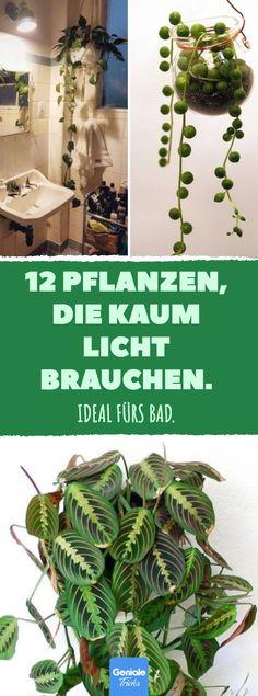 12 Pflanzen, die kaum Licht brauchen. #pflanzen #bad #zimmerpflanzen