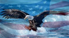 Us Navy, Bald Eagle, Bird, Animals, Animales, Animaux, Birds, Animal, Animais