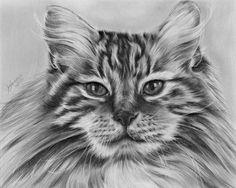 Cat Study by jennieannie.deviantart.com on @DeviantArt