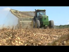 Georgia peanut producers are out in the fields harvesting their 2014 crop. The Monitor's Mark Wildman paid a visit to one Tift County peanut farmer who is excited about the harvest season, but realizes farmers have seen better years.