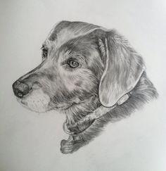 Custom Pet Portrait  Dog drawing Personalized by PatouPetPortraits, $80.00