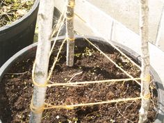 building a cucumber trellis – one veggie at a time