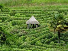 very impressive topiary field