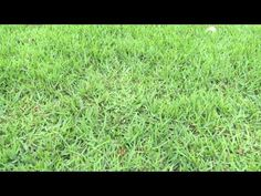 Lawn Fungus in Metairie and New Orleans