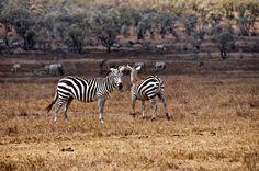Pedalear entre antílopes y cebras en el Parque Nacional de Hell's Gate en Kenia
