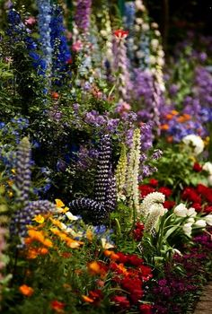 Spring flower beds in st james park flower fields and trees spring flower beds in st james park flower fields and trees pinterest saint james spring flowers and london england mightylinksfo
