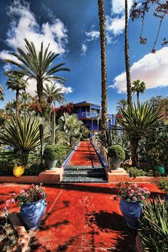 What a beautiful and colorful picture of the Majorelle Gardens!
