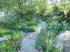 Cleve West's wonderful show garden for Chelsea Flower Show