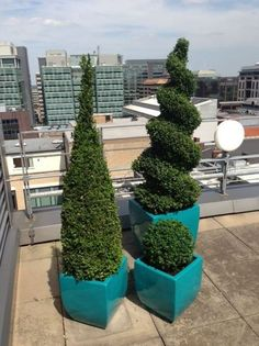 Plants for West Midlands Solicitors new offices