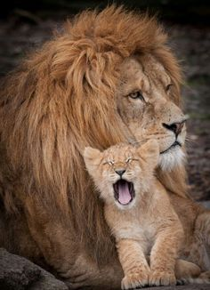 Mufasa and simba <3:-D