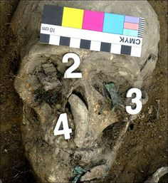 The death mask, with number 4 marking the bear's fang, and numbers 2 and 4 showing metal fish figurines with broken-off heads that were covering the warrior's eye sockets. Picture: Institute of Archeology and Ethnography, Siberian branch of Russian Academy of Sciences