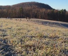 Frosty morning #vt #Vermont #frost #sheep #grassfed #sustainablefarming #newengland #soVT