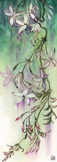 Midnight Ramblings: Jasmine
