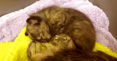 A Baby Squirrel Joins A Litter Of Kittens…Too Cute!   The Animal Rescue Site Blog