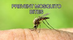 How To Prevent #Mosquito #Bites While Sleeping, Camping at Home