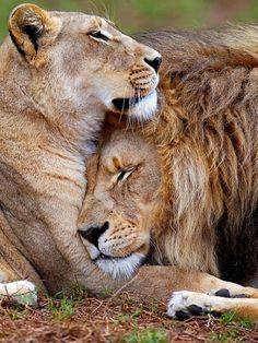 Wild Love!!!