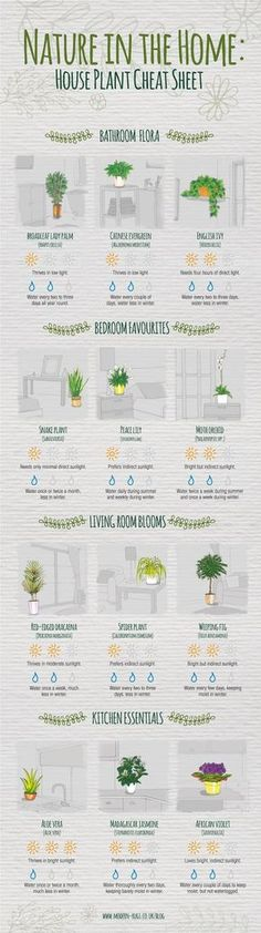 Never question how much sunlight your spider plant needs again.