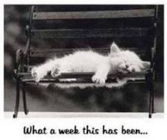 What a week this has been.  I can so relate to this.