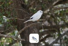 El Shazam de los pájaros se llama BirdNet App