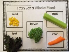 Snack idea: I can eat a whole plant activity! Learning all about the parts of a plant. $