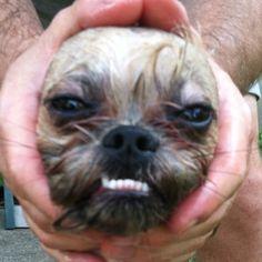Alien or dog? Hehe