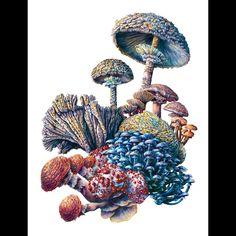 Watercolor mushroom painting by Martha Iserman aka Bug Red Sharks Natural World, Natural History, Mushroom Paint, Watercolor Images, Sharks, Ecology, Stuffed Mushrooms, Drawings, Illustration