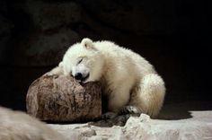 Tired Little Bear